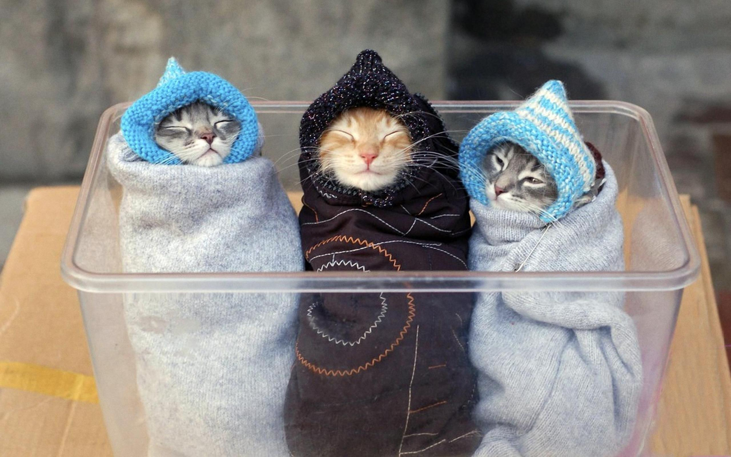 three-funny-cats-wrapped